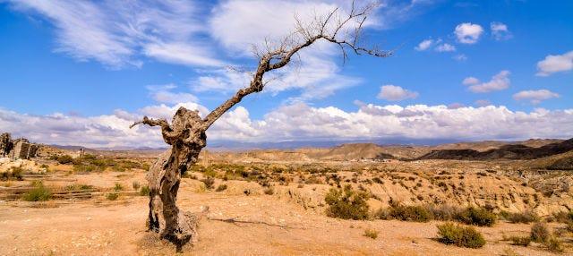 Excursión al desierto de Tabernas