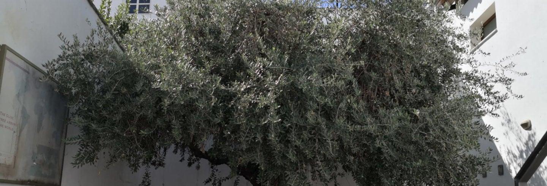 Olive Oil Museum & Tasting