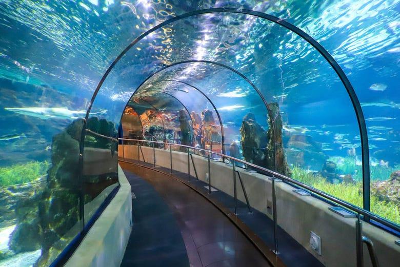 Billet pour l'Aquarium de Barcelone