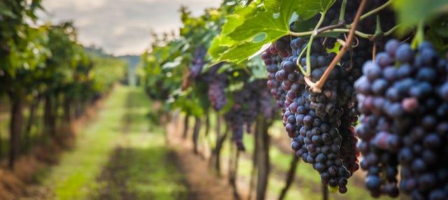 Tour in jeep dei vigneti del Penedès