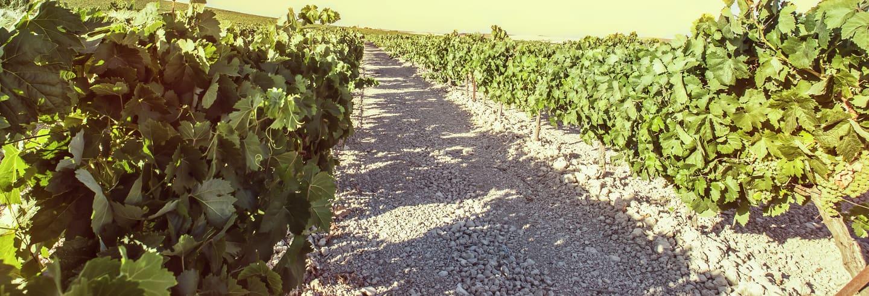 Tour do vinho de Jerez