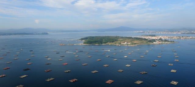 Paseo en barco por la Ría de Vigo + Degustación de mejillones