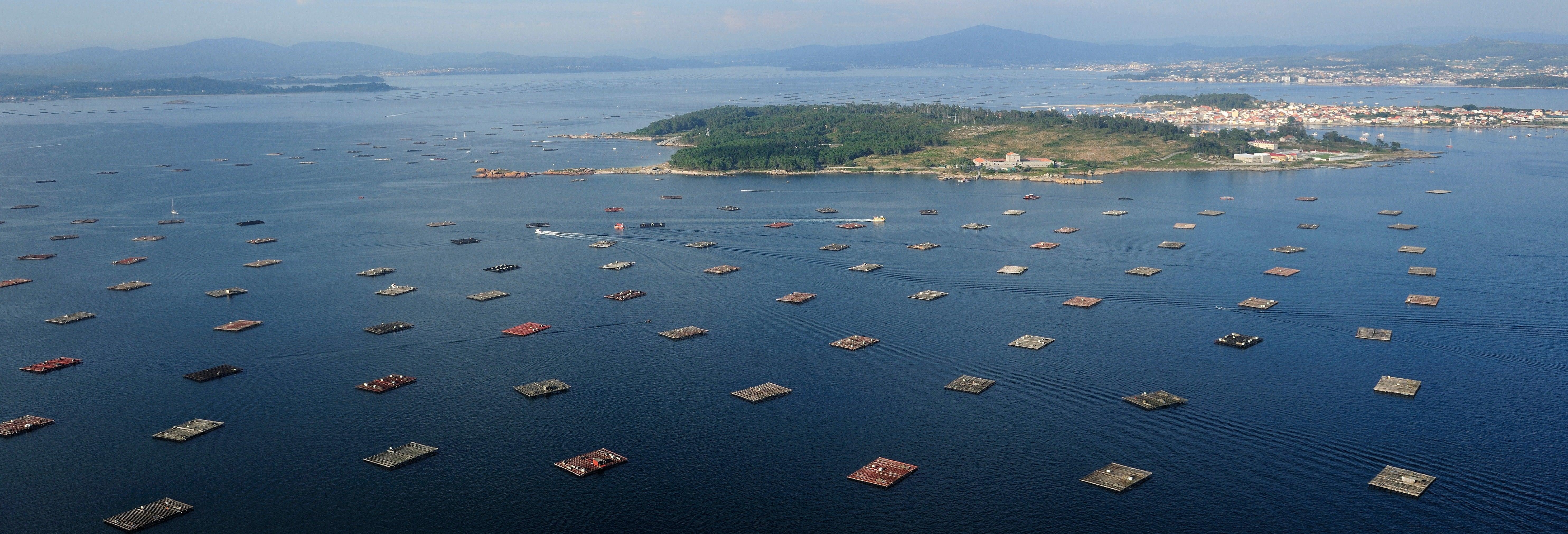 Passeio de barco pela Ria de Vigo + Degustação de mexilhões