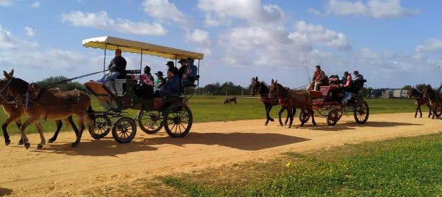 Paseo en carreta por los alrededores de Doñana y El Rocío