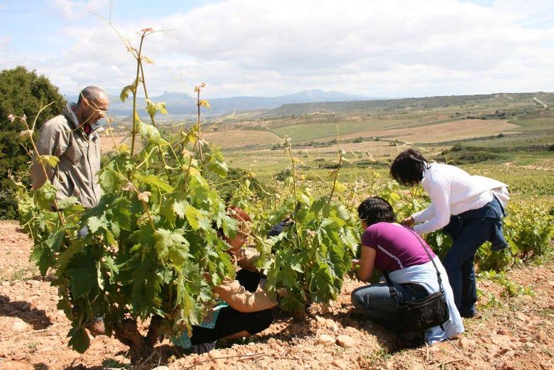 Visite de vignobles et de caves à vin
