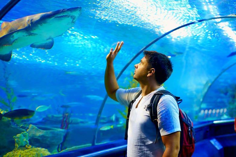 Billet pour l'Aquarium de Gijón