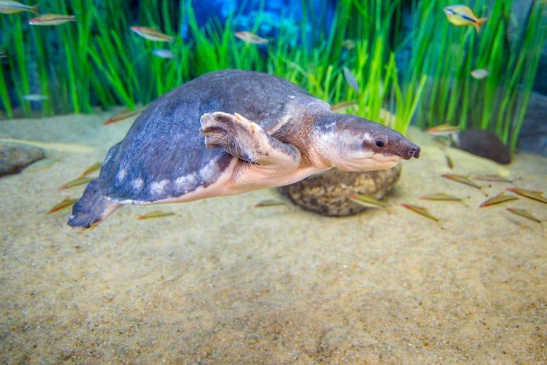 Poema Del Mar Aquarium Tickets In Gran Canarias Thailand Et Ticket Sea Life Ocean World Only Child One Of Aquariums Turtles