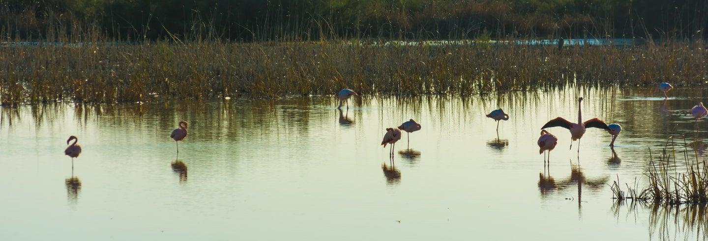 Excursion au Parc National de Doñana