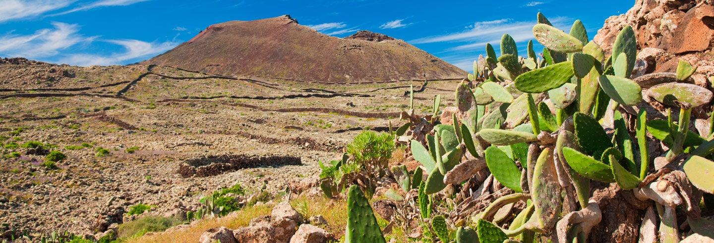 Excursión a Fuerteventura