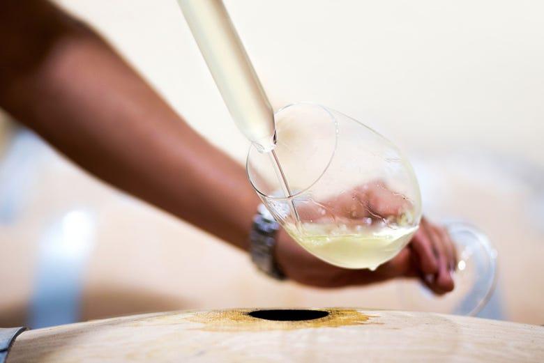Visite du domaine viticole de Rioja Vega