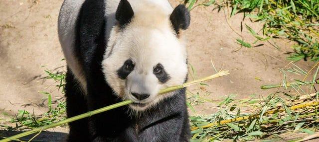 Entrada al Zoo Aquarium
