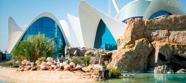 Excursi n a valencia en ave desde madrid disfruta madrid for Aquarium valencia precio