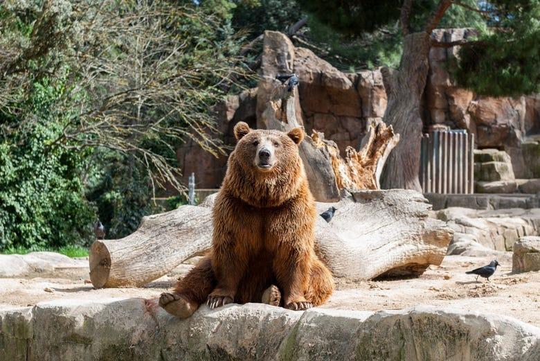 Billet pour le Zoo Aquarium