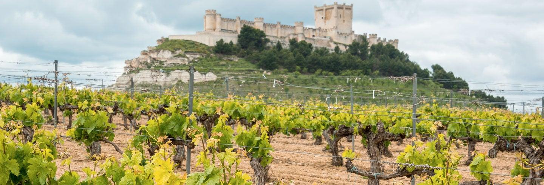 Tour de vinos y castillos por la Ribera del Duero