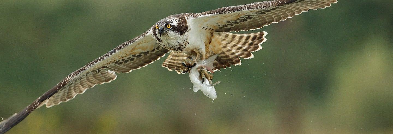 Avistamiento de aves en la bahía de Santander