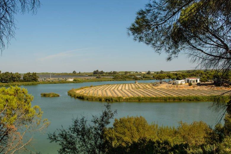 Balade en bateau sur la Ría de Huelva
