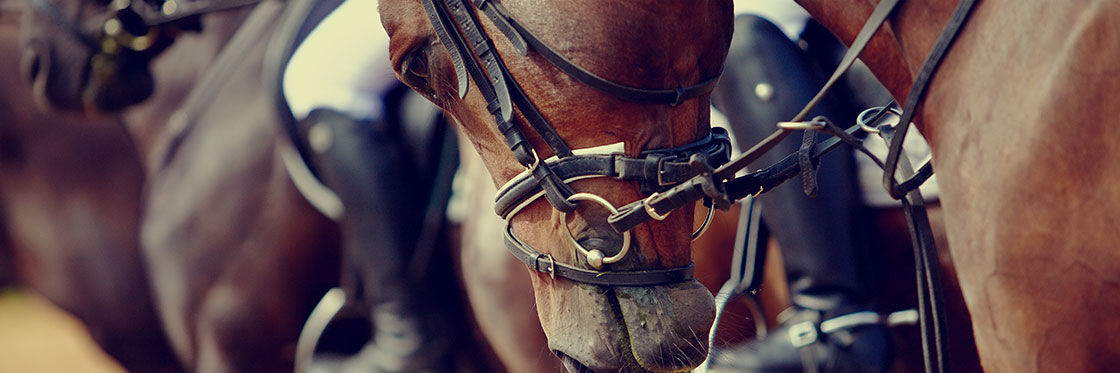 Carreras de caballos en Menorca