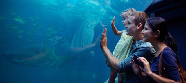 Entrada al Aquarium Costa de Almería