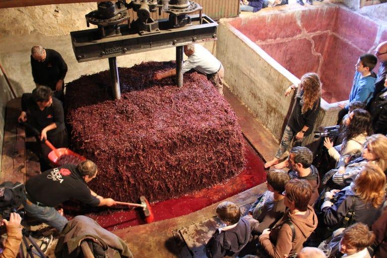 Visite du domaine viticole de Lecea