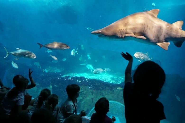 Billet pour l'Aquarium de Séville