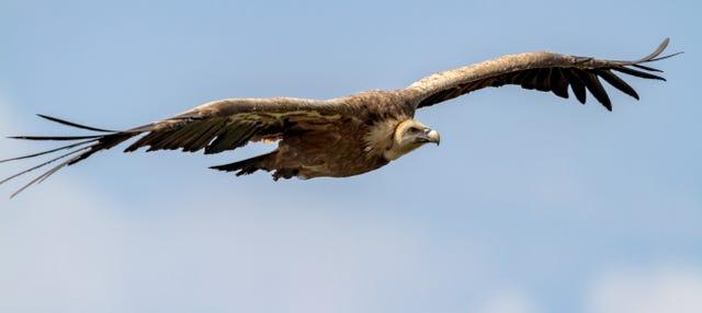 Avistamiento de aves en la Sierra de Gata