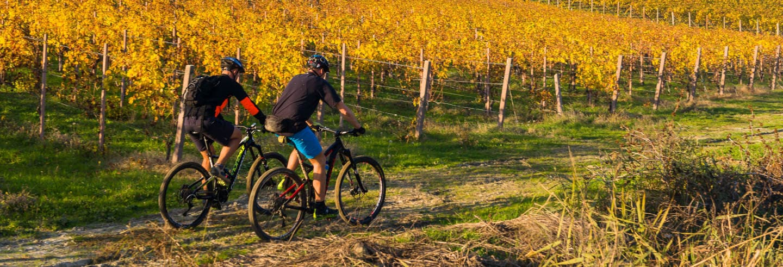 Tour in bici dei vigneti dell'Alt Penedès