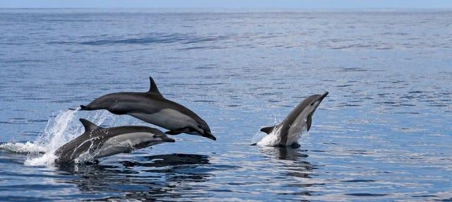 Avistamiento de cetáceos