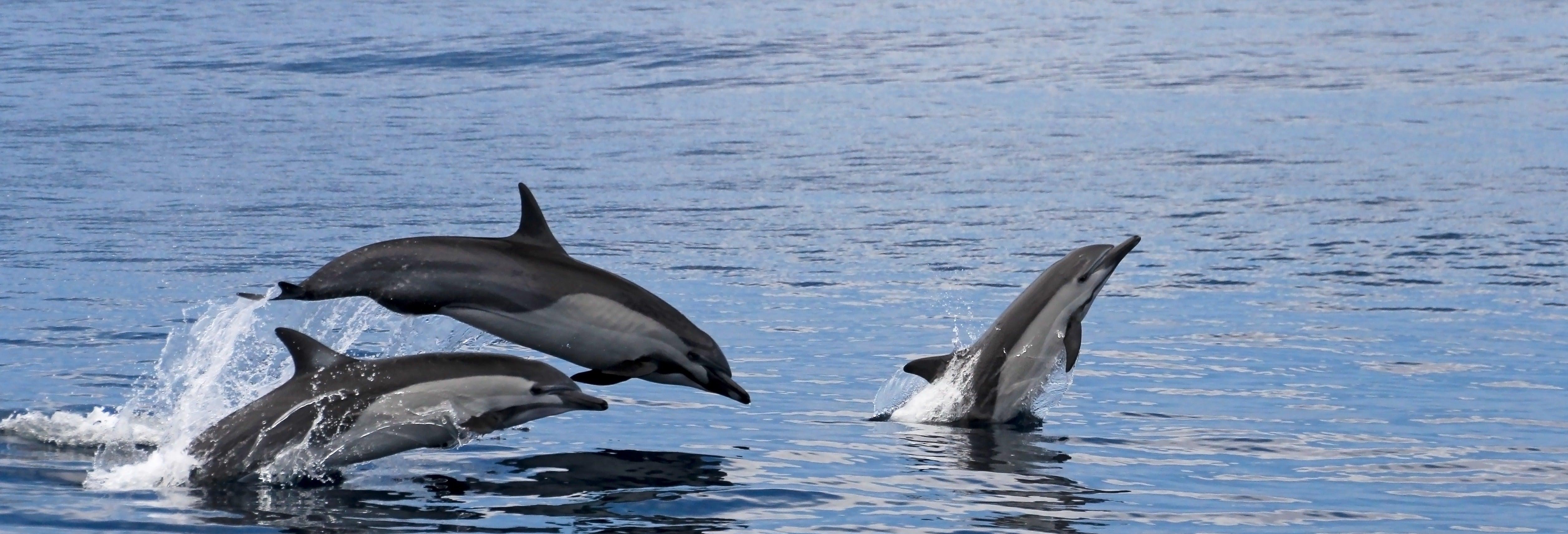 Observation de dauphins et de baleines