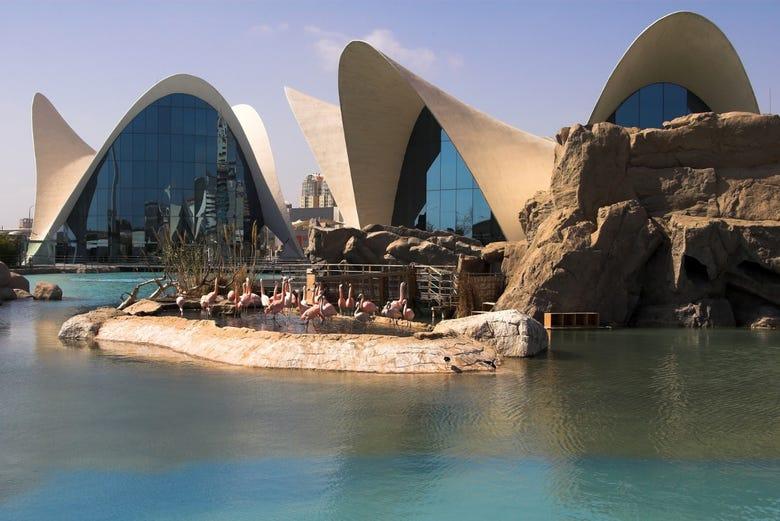 Visita guiada por la ciudad de las artes de valencia con for Oceanografico valencia