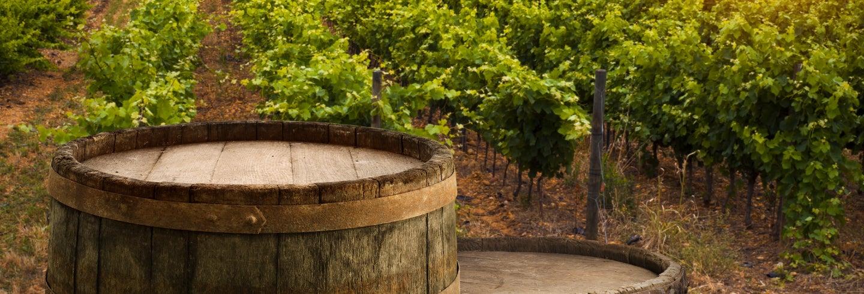 Ruta del vino por Valladolid
