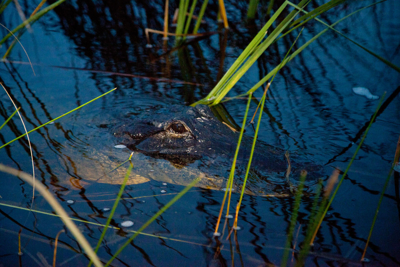 ,Excursión a las Everglades