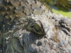 Navigating through crocodiles and alligators