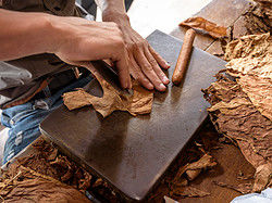 Demonstration of the cigar making process