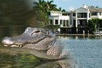 Offer: Everglades and Boat Tour