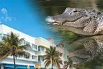 Offer: Miami Tour and Everglades Excursion