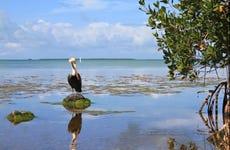 Offerta: Everglades + giro in barca