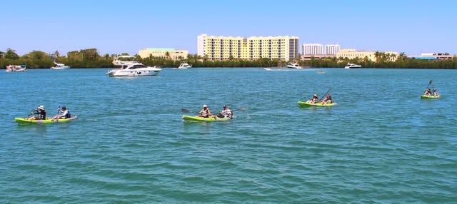 Tour en kayak por Miami