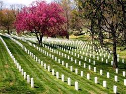 L'Arlington Cemetery
