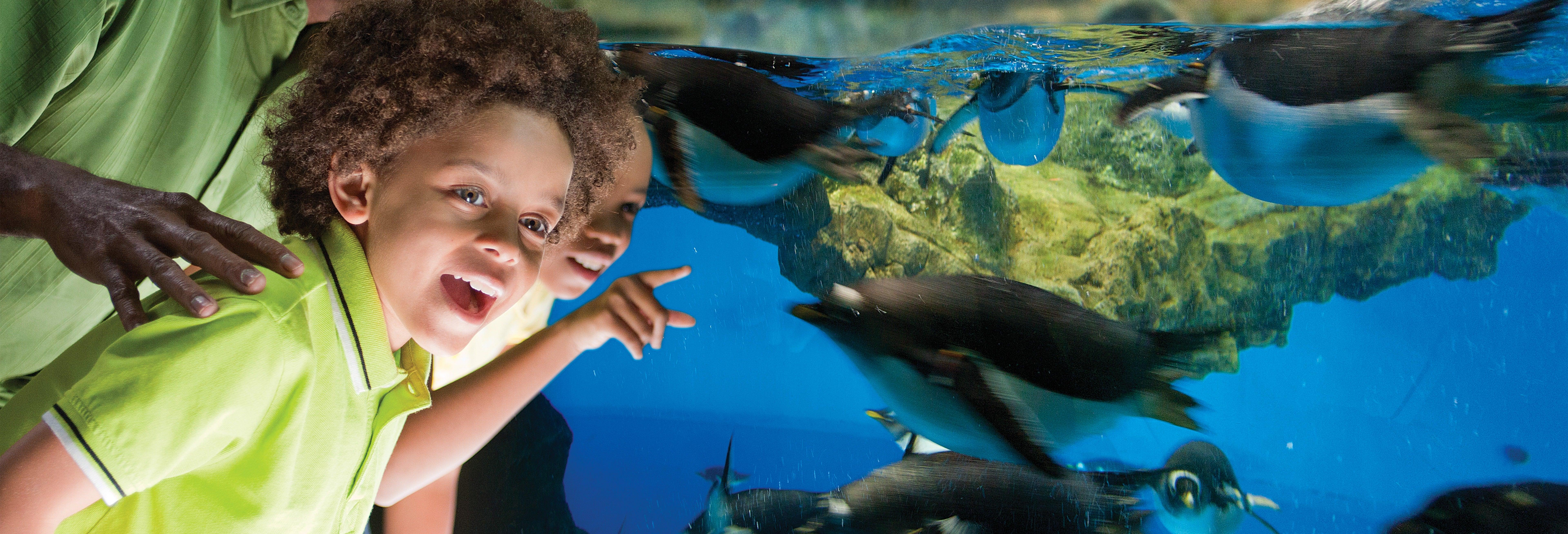 Ingresso do SeaWorld San Antonio