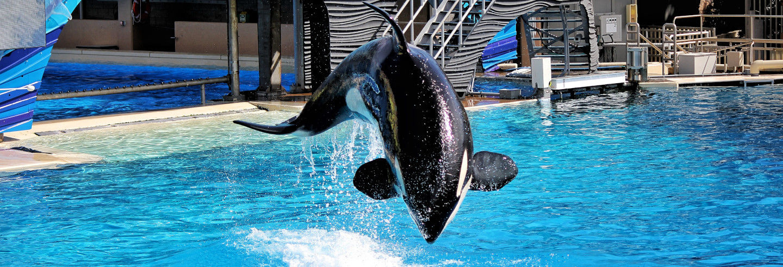 Excursão ao SeaWorld San Diego