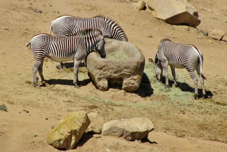 Billet pour le Zoo de San Diego