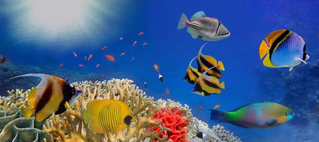 Entrada a LEGOLAND California + SEA LIFE Aquarium