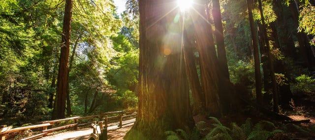 Muir Woods y viñedos de California