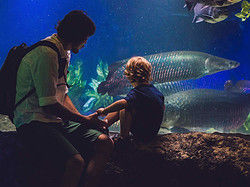 Observing the marine life at the Aquarium of the Bay