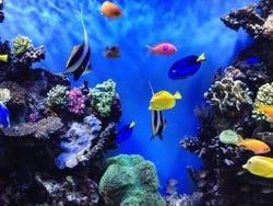 Diverse species of fish at the Aquarium of the Bay