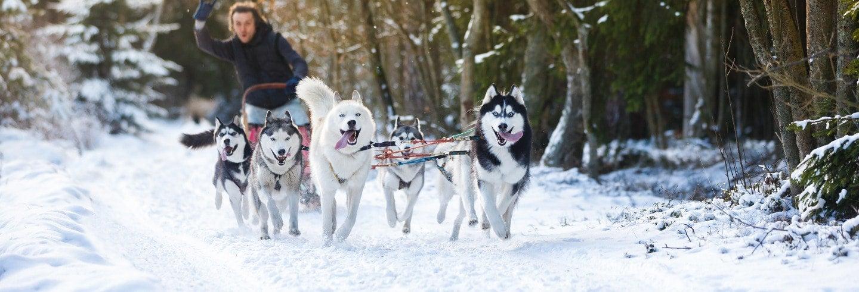 Conducción de trineos de perros husky