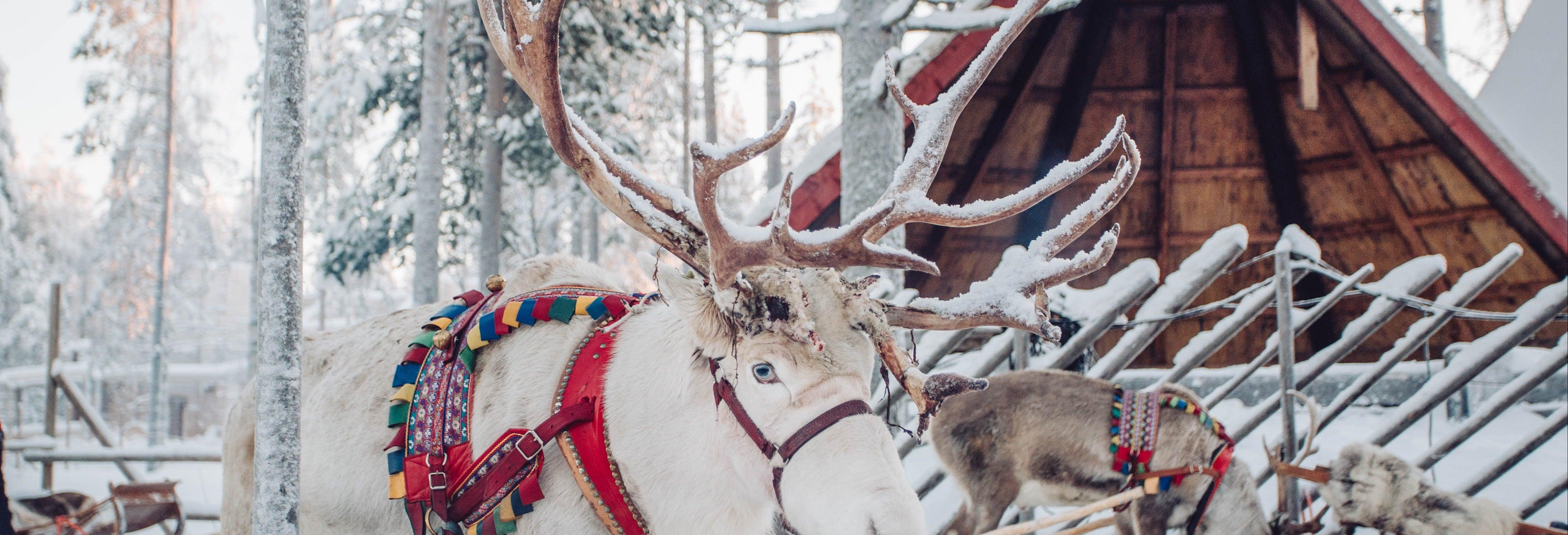 Village du Père Noël + Balade en traineau de rennes