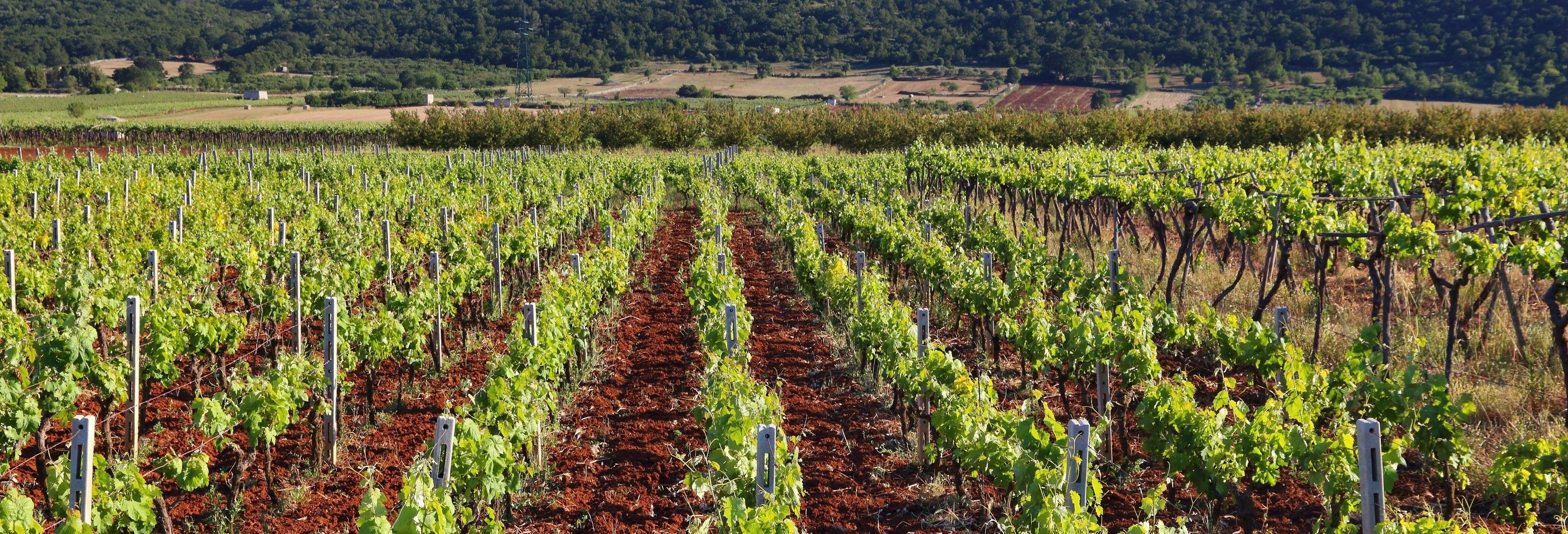 Tour do vinho por Mont Sainte-Victoire