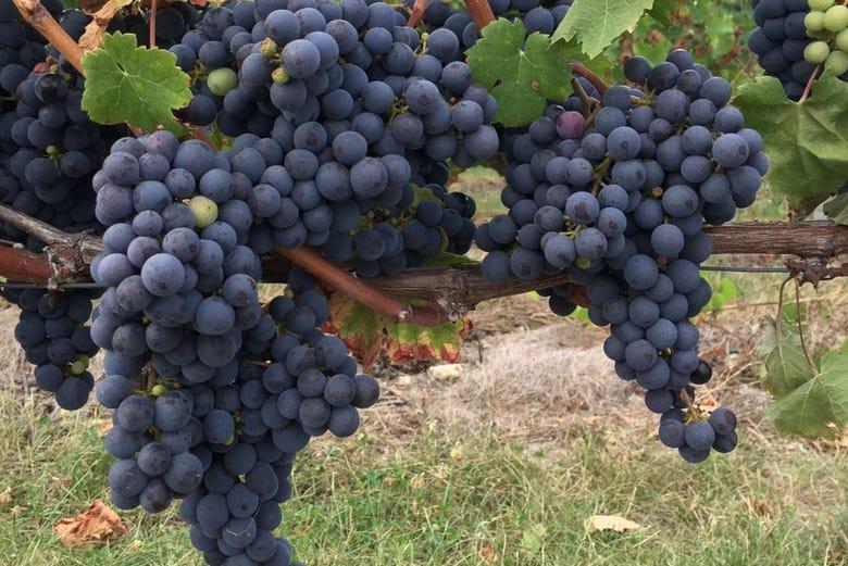 Visite autour du vin dans la vallée du Rhône