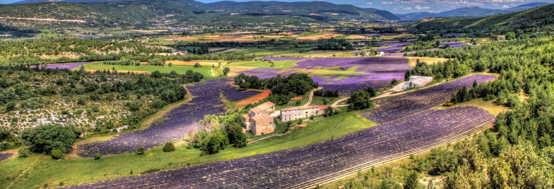 Luberon Lavender Fields